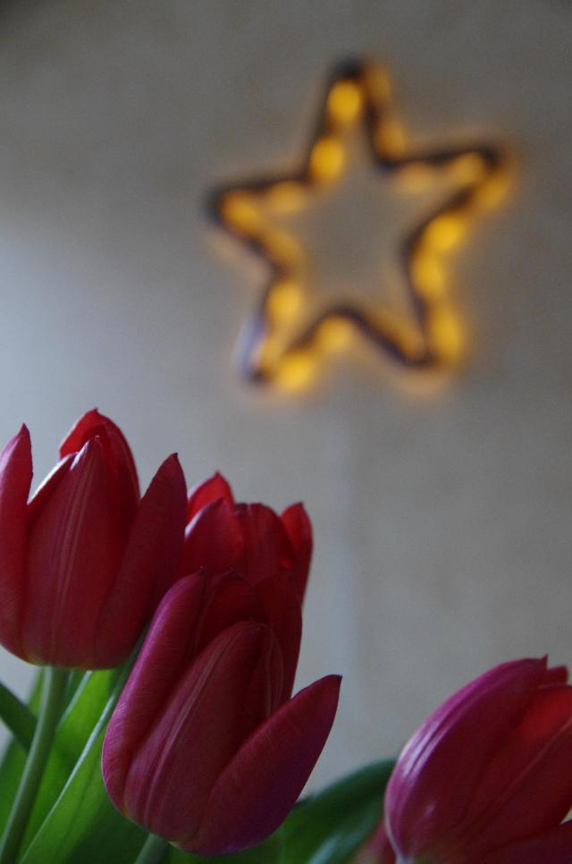 Tulip Star